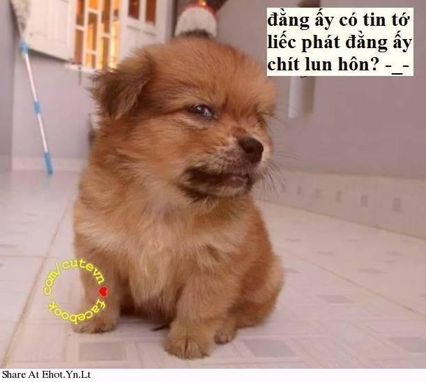 co-tin-khong-ha-.html